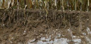 La France agricole – Le stockage de carbone dans le sol est un levier réel, mais limité