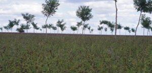 Cultivar – Stocker le carbone et ne surtout plus en déstocker