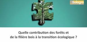 Quelle contribution des forêts et de la filière bois à la transition écologique?
