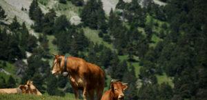 L'alimentation et l'agriculture de demain en Bourgogne-Franche-Comté