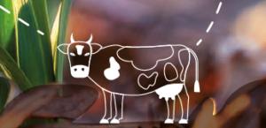 Quelle place pour l'élevage face aux enjeux actuels?